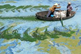 Pescadores remam um barco no Lago Chaohu, na China, cheio de algas. Imagem: http://en.fishki.net