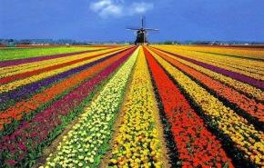 Campos de tulipa na primavera Holandesa. Foto: http://blogreservva.blogspot.com.br/